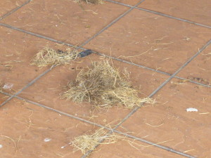 Bird nest needs to be removed and cleaned up with detergent to prevent bird from returning to target area.